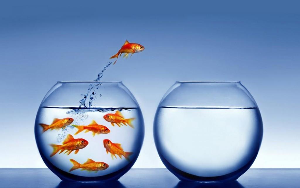 leaping_goldfish